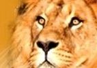 Imposto de Renda 2012 - Debian