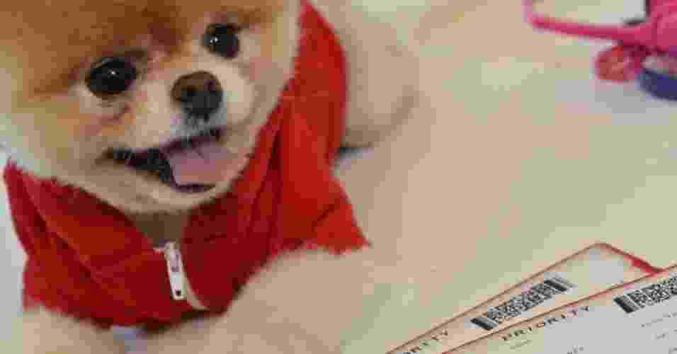 """A companhia aérea Virgin America, do bilionário britânico Richard Branson, contratou o cachorro Boo para ser seu 'garoto-propaganda'. O cão da raça Lulu da Pomerânia é considerado """"o mais fofo do mundo"""" por fãs na internet --e ele tem mais de 5 milhões de fãs em seu perfil no Facebook - Divulgação"""